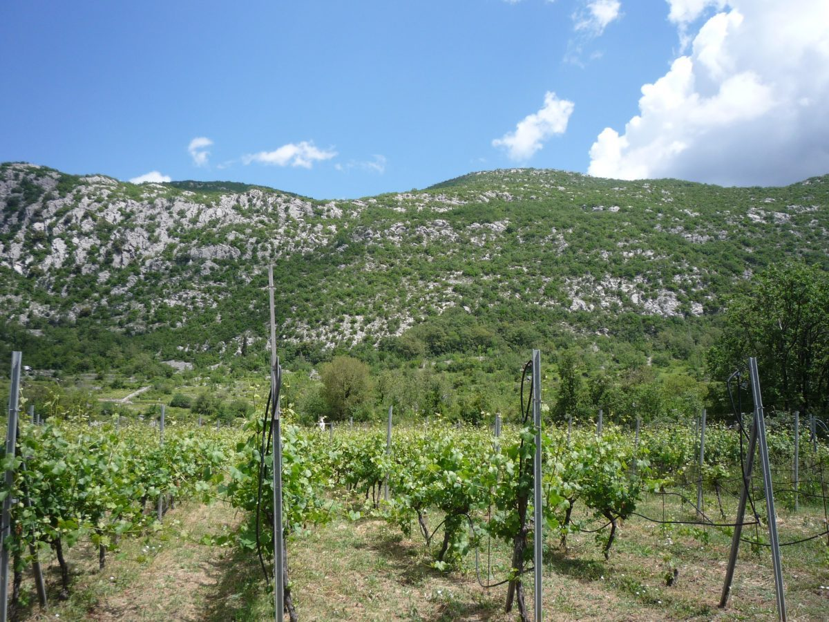 Private vineyard